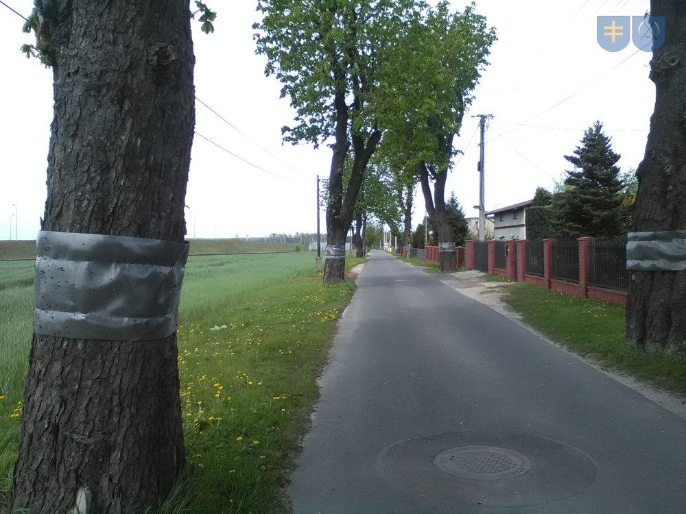 Ulica Kasztanowa - leczenie drzew