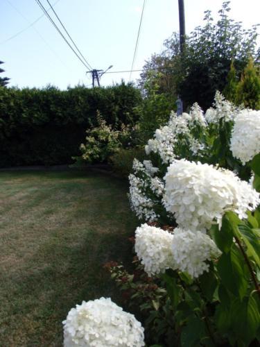 Konkurs najpiękniejszy ogród - ul. Reja 31