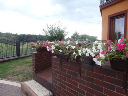 Konkurs najpiękniejszy ogród - ul. Tęczowa 13B
